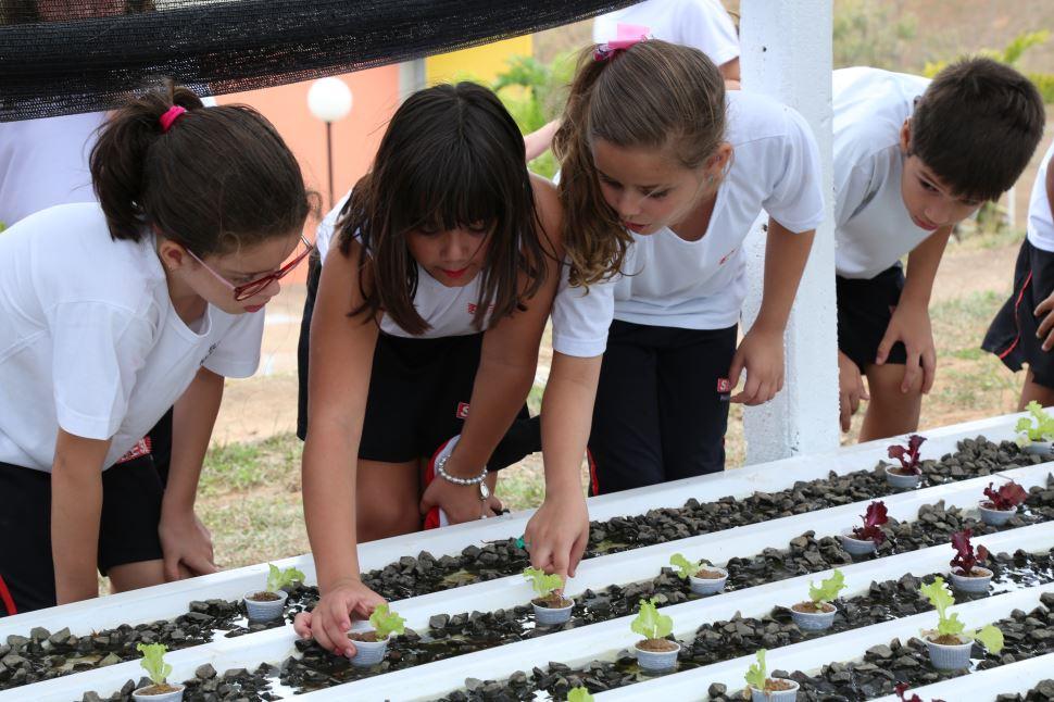 Projeto de Hidroponia é desenvolvido na Escola SESI de Presidente Epitácio