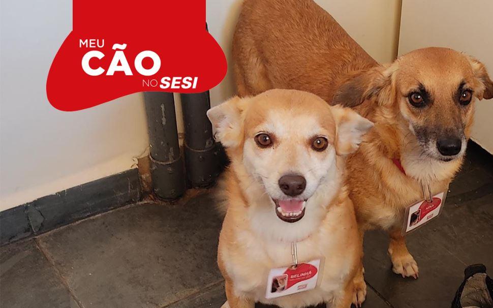 Sesi e Senai-SP já adotaram 149 cães